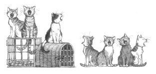 Mr Capelli's Educated Cats